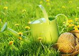 Fertilisez votre pelouse avec de l'herbe coupée ou du compost alimentaire plutôt que d'utiliser les pesticides!