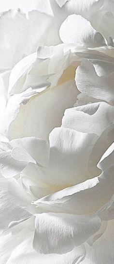 All Things White | Rosamaria G Frangini || White blossom | ***Nature Flowers***