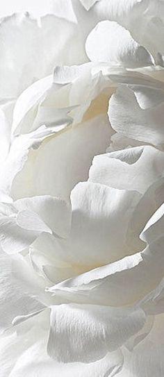 All Things White | Rosamaria G Frangini || White blossom | ***Nature Flowers***