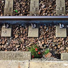 #unexpected #flowers #rails #railroad #railway #poppy #red #fiori #inaspettati #papaveri #ferrovia #binari #shotonmylumia #shotonlumia #lumiaphotography #lumia #flowersofinstagram #flowersporn #instagrammers #instamood #instadaily #likeme #followme