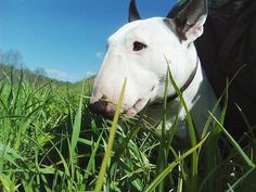 """Some bullies """"trance,""""  when their face is in leaves or grass!"""