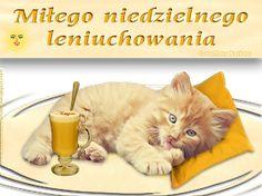 fm : Home Humor, Animals, Night, Photos, Kittens, Cheer, Animaux, Animal, Ha Ha