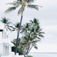 palm trees are my sign of summer Summer Breeze, Summer Vibes, Summer Days, Tahiti, Santorini, Maldives, The Beach People, Wanderlust, Destinations