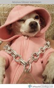 Chi living the gangsta life. Lol