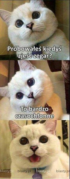 Funny Memes to Brighten Your Monday Funny Dog Jokes, Puns Jokes, Really Funny Memes, Stupid Funny Memes, Funny Relatable Memes, Dad Jokes, Hilarious, Funny Minion, Dog Cat