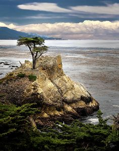 The Lone Cypress At Monterey Bay
