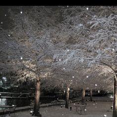 white snow trees
