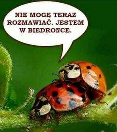 Saturday Humor, Weekend Humor, Funny Wishes, Funny Mems, Smile Everyday, Creepypasta, Man Humor, Best Memes, Funny Cute