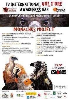 """Los """"cebos envenenados siguen machacando a un buen número de depredadores y aves carroñeras en ... Vulture, Fauna, Small Groups, Birds, Tours, Movie Posters, Life, International Day Of, Predator"""