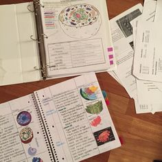 "studydud: "" 10:09 pm US CST Making a binder for all of my AP Bio stuff (better late than never). Feels good to get organized! """