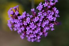 9130 Nature images - Free stock photos on StockSnap. Beginner Drawing Lessons, Drawing For Beginners, Easy Love Spells, Powerful Love Spells, Evergreen Ground Cover Plants, Prayer For Marriage Restoration, Love Binding Spell, Love Spell Chant, Small Purple Flowers