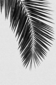 Palm Leaf I B&W Art Print by Orara Studio – White and Black Wallpaper Black And White Photo Wall, Black And White Posters, Black And White Wallpaper, Black And White Painting, Black And White Pictures, Black And White Aesthetic, Black And White Design, Aesthetic Dark, Aesthetic Vintage
