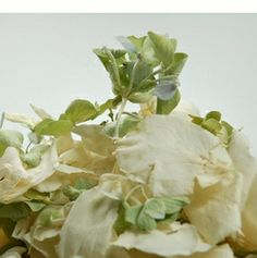 Ivory Rose Petals and Green Hydrangea Florets Freeze Dried 5 cups | 175 - 200 petals