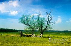 cool Fotografie »Im Moor 21«,