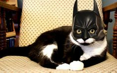 I'm Bat---well, you know.....