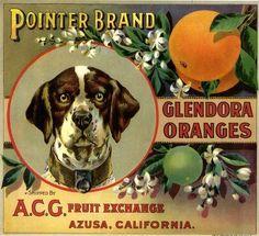 Glendora Pointer Hound Dog Orange Citrus Crate Label