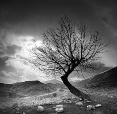 The Dancing Tree by Tony Elieh