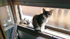 Amistad entre gato, codorniz y conejo ;-)