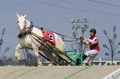 ハクバボーイのお母さん♡白毛でばんえい史上初の競走馬となったお母さん・ハクバビューティー