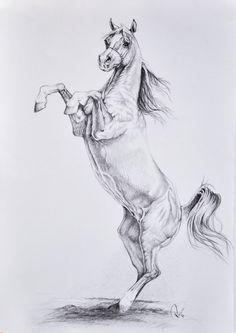 16 Melhores Imagens De Cavalos Tumblr Cavalos Cavalos Tumblr E