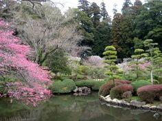 KairakuEn - Mito - Bonsai Empire / one of the three best gardens in Japan. Best season is Feb.