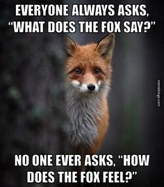 Emotionally distraught fox