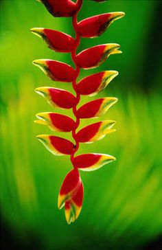 Resultado de imagem para plantas tropicais