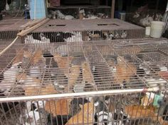 China: Ban dog and cat meat « Care for Chinese Animals-Shocked you should be!  Sign the petition @ care for chinese animals.net. Cats and dogs are being kept in horrifying conditions, abused and then murdered for their meat by the Chinese.
