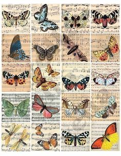100 year old butterfly engravings on sheet music