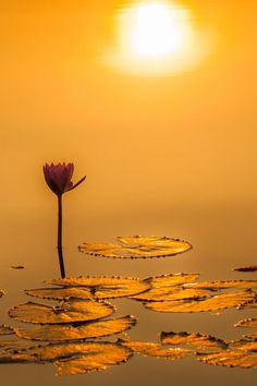 The Perfect World. Beautiful World, Beautiful Places, Beautiful Pictures, Image Yoga, Mellow Yellow, Water Lilies, Amazing Nature, Wonders Of The World, Nature Photography