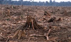 Deforestation—the permanent destruction of forests in order to make the land available for other uses.This is a cleared forest in Riau province, Sumatra, Indonesia. Rainforest Deforestation, Deforestation Facts, Rainforests, Smart Balance, Tropical Forest, Amazon Rainforest, Environmental Issues, Endangered Species, Endangered Elephants