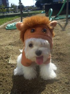 i'm normally against animals in clothes, but my future westie may have to wear this.  lots of other cute animals pics to put a smile on your face.