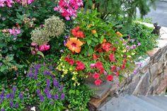 fleurs de jardin autour des marches d'escalier - roses de Chine et pétunias