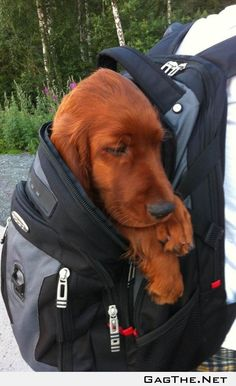 He was so tired he had to be carried home