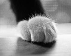 Hey, I found this really awesome Etsy listing at https://www.etsy.com/ca/listing/244256705/tuxedo-cat-paw-cat-photography-cat-decor