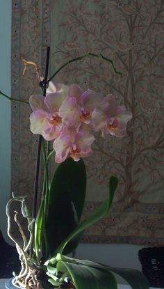 my orchid...