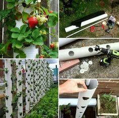 Leuk idee om aardbeien te kweken