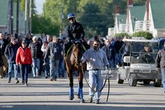 American Pharoh walks to the track during the morning training for the Kentucky Derby at Churchill Downs on April 28, 2015 in Louisville, Kentucky.