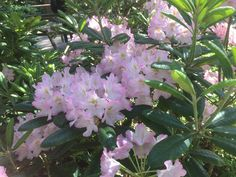 Rhododendron Park, Plants, Plant, Planets