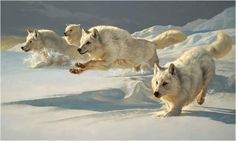 Arctic wolves on the hunt By Robert Bateman