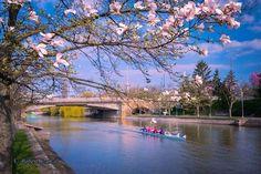 Canalul Bega,Timișoara Europe