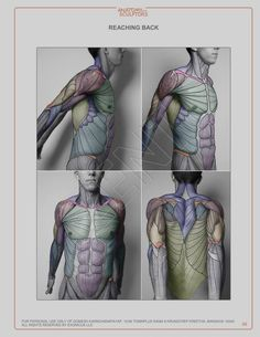326 best Anatomy drawing images on Pinterest in 2018 | Anatomy ...