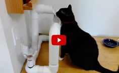 This is what happens when an engineer has a cat. He builds him a cool water fountain. Here are the instructions: Source: engineering for cats.
