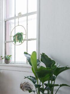 Meet Vera Petersen – Local Plant Parent and Photo Contest Winner