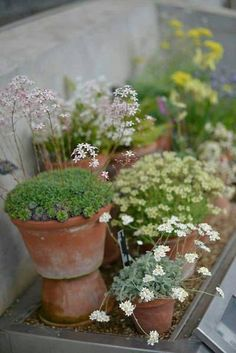 Kew Gardens, Back Gardens, Small Gardens, Outdoor Gardens, Garden Shrubs, Garden Pots, Garden Landscaping, Container Plants, Container Gardening