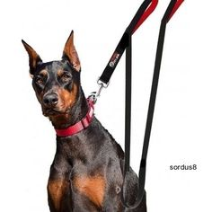 Dog Leash 2 Handles  BLACK  Extra Long 8-ft Lead  Heavy Duty Double Handle #PrimalPetGear