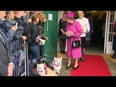 The best dogs ever!   The palace corgi whisperer shows how Queen Elizabeth II's dogs are trained.