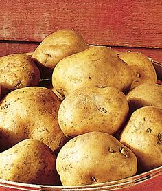 Kennebec Potato....One of Fine Gardening's 10 Foolproof Veggies