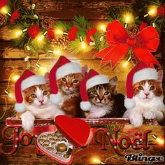 Found on Bing from Merry Christmas Cat, Hello Kitty Christmas, Vintage Christmas, Christmas Scenes, Christmas Animals, Christmas Pictures, Xmas Gif, Good Night Greetings, Christmas Entertaining