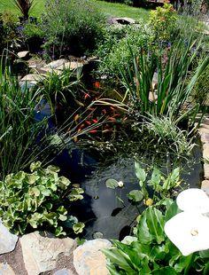 beautiful small pond - nice size.  iris' in full sun will grow in it.